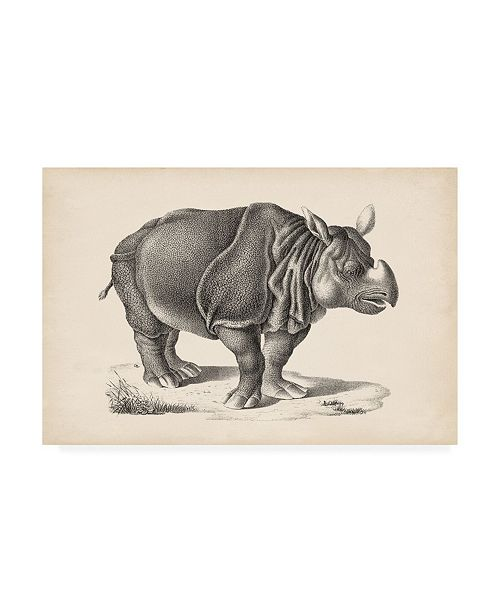 "Trademark Global Brodtmann Brodtmann Rhinoceros Canvas Art - 19.5"" x 26"""