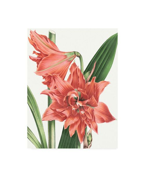 "Trademark Global Vision Studio Floral Beauty VII Canvas Art - 27"" x 33.5"""