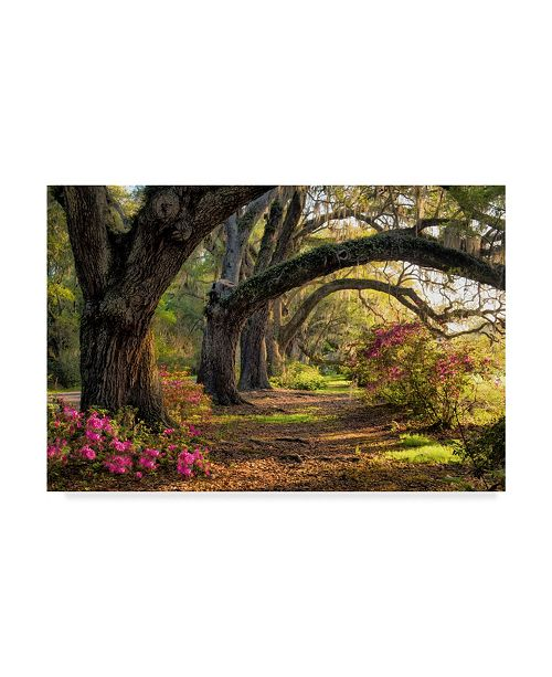 "Trademark Global Danny Head Under the Live Oaks I Canvas Art - 15"" x 20"""