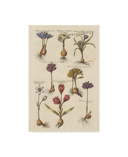 "Trademark Global Wild Apple Portfolio Vintage Florilegium I Canvas Art - 15"" x 20"""
