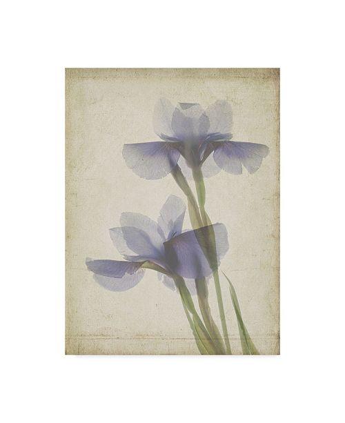 "Trademark Global Judy Stalus Parchment Flowers VIII Canvas Art - 20"" x 25"""