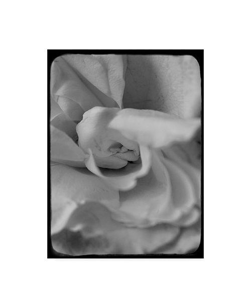 "Trademark Global Judy Stalus Rose Spiral II Canvas Art - 20"" x 25"""