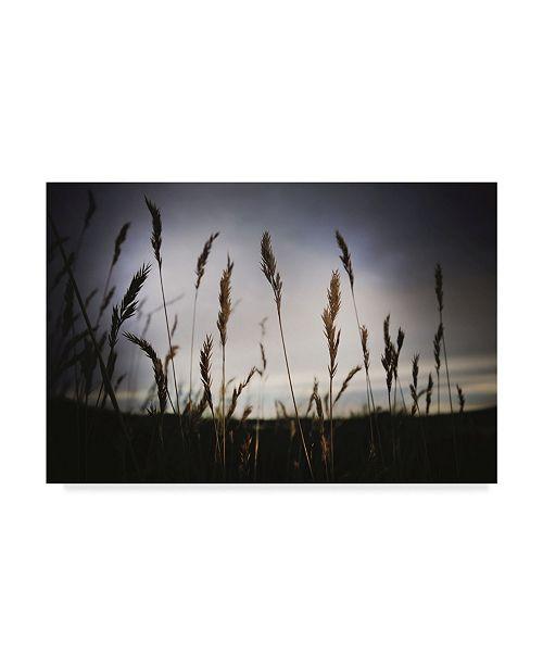 "Trademark Global Christine Sainte-Laudy Grass at Dusk Canvas Art - 20"" x 25"""