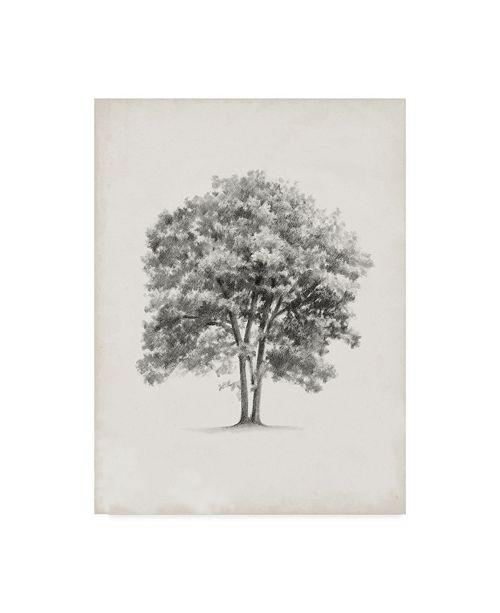 "Trademark Global Ethan Harper Vintage Arbor Study II Canvas Art - 20"" x 25"""