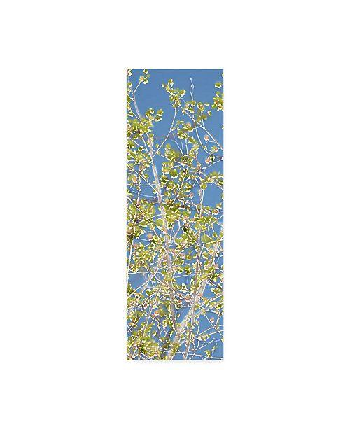 "Trademark Global Sharon Chandler Spring Poplars II Canvas Art - 37"" x 49"""