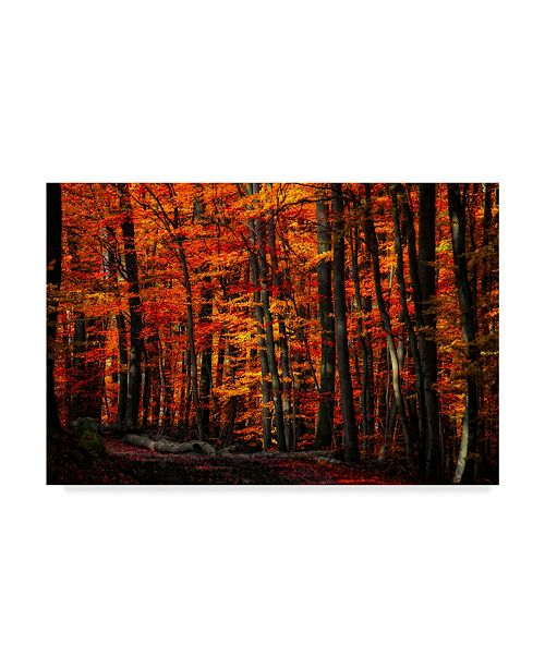 """Trademark Global Philippe Sainte-Laudy Forest Density Canvas Art - 37"""" x 49"""""""