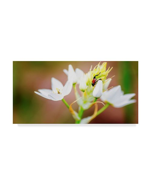 "Trademark Global Pixie Pics Bug on Flowers Canvas Art - 20"" x 25"""