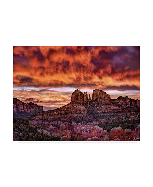 "Trademark Global David Drost Pink Morning Glory IV Canvas Art - 20"" x 25"""