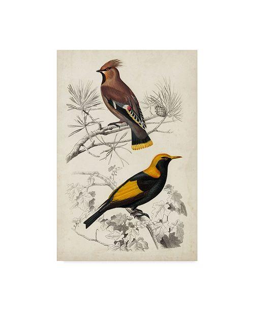 "Trademark Global M. Charles D'Orbigny D'Orbigny Birds V Canvas Art - 15"" x 20"""