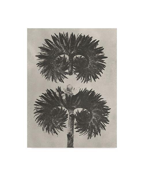 """Trademark Global Karl Blossfeldt Blossfeldt Botanical V Canvas Art - 20"""" x 25"""""""