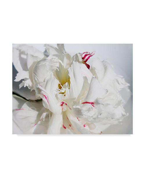"Trademark Global Irena Orlov Breathless I Canvas Art - 15"" x 20"""