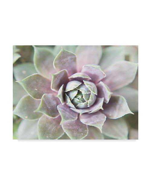 "Trademark Global Jason Johnson Succulent Glow II Canvas Art - 15"" x 20"""