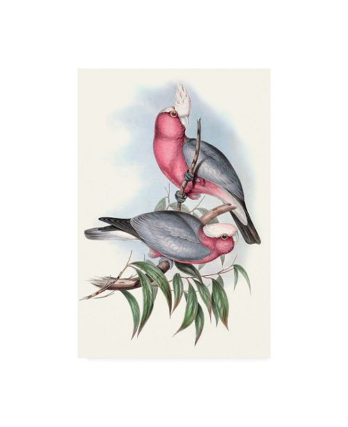 "Trademark Global John Gould Pastel Parrots III Canvas Art - 37"" x 49"""