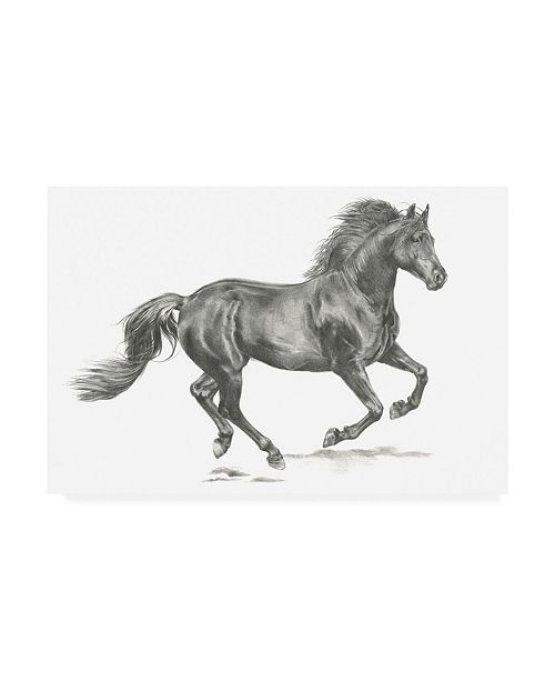 "Trademark Global Jennifer Paxton Parker Wild Horse Portrait II Canvas Art - 20"" x 25"""