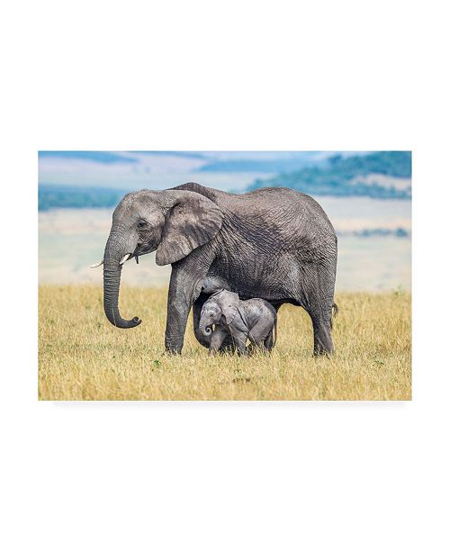 "Trademark Global Jeffrey C. Sink A Wee One Canvas Art - 19.5"" x 26"""