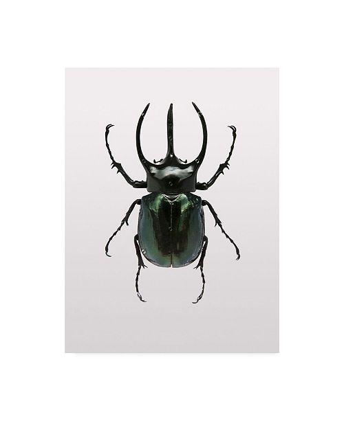 """Trademark Global Design Fabrikken Beetle 2 Fabrikken Canvas Art - 15.5"""" x 21"""""""