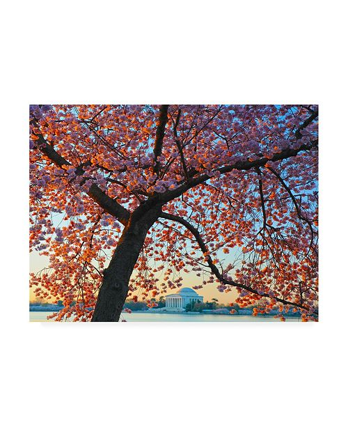 "Trademark Global Mitch Catanzaro Morning Blossom Canvas Art - 15.5"" x 21"""