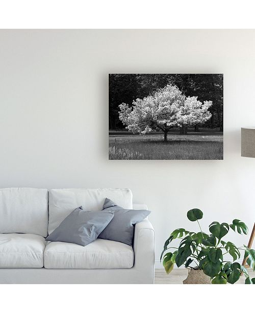 Macys Furniture Outlet Michigan: Trademark Global Monte Nagler Cherry Blossom Michigan