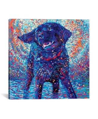 """Canines & Color by Iris Scott Wrapped Canvas Print - 37"""" x 37"""""""