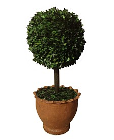 "Laura Ashley 29"" Tall Preserved Boxwood Ball Artificial Faux Decor in Clay Pot"