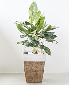 Martha Square Wicker Smart Self-Watering Planter