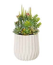 "12"" Tall Succulent Plants in Ceramic Pot"