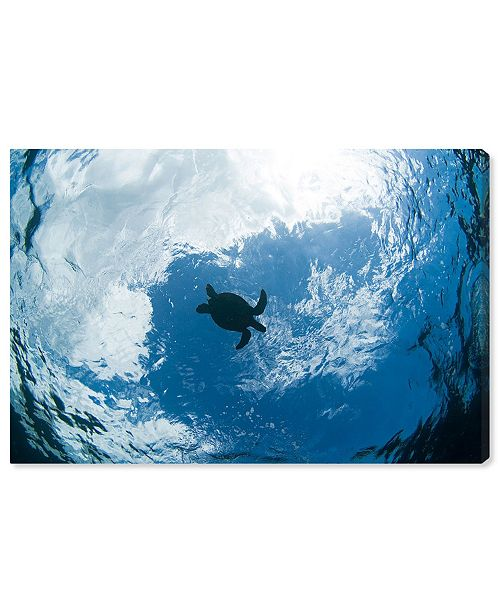 """Oliver Gal Green Sea Turtle From Below by David Fleetham Canvas Art, 36"""" x 24"""""""