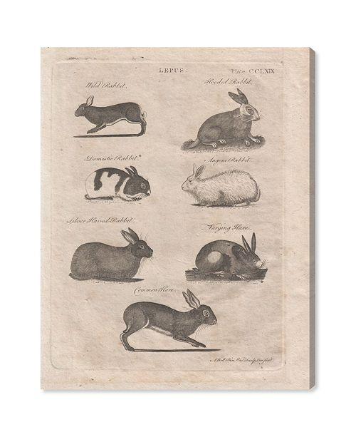 "Oliver Gal Lepus Rabbits Canvas Art, 24"" x 36"""