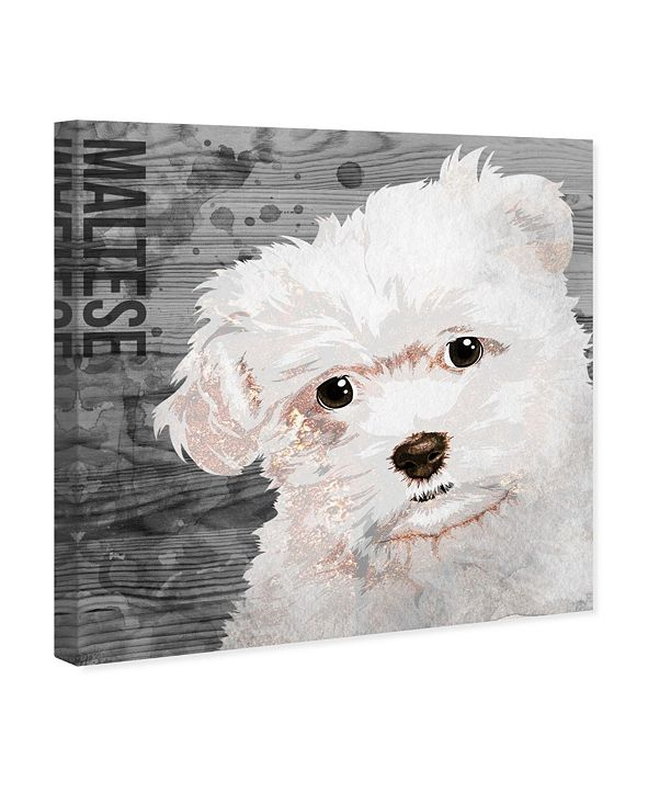 "Oliver Gal Love My Maltese Canvas Art, 24"" x 24"""