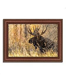 """Black Antler Moose Framed Photograph Print, 43"""" x 31"""""""