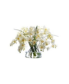 Winward International Phalaenopsis in Glass