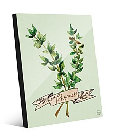 Watercolor Thyme on Green Acrylic Wall Art Print Collection