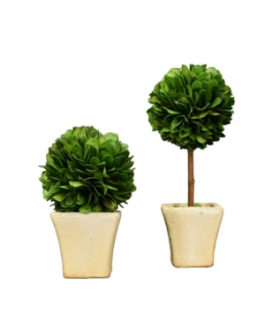 Mills Floral Preserved Boxwood Mini Ball Topiaries - Set of 2 Piece