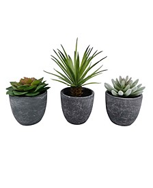 Set of 3 Multi Succulents, Created for Macy's