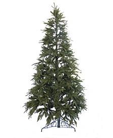 6' Northern Shasta Fir Christmas Tree