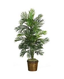 4.5' Areca Palm Tree with Wicker Basket