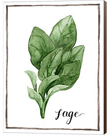 Watercolor Herbs VI by Grace Popp Canvas Art