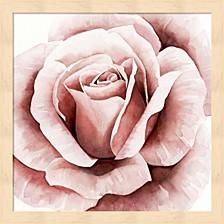 Pink Rose Ii By Grace Popp Framed Art