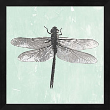 Dragonfly Ii By Pi Galerie Framed Art