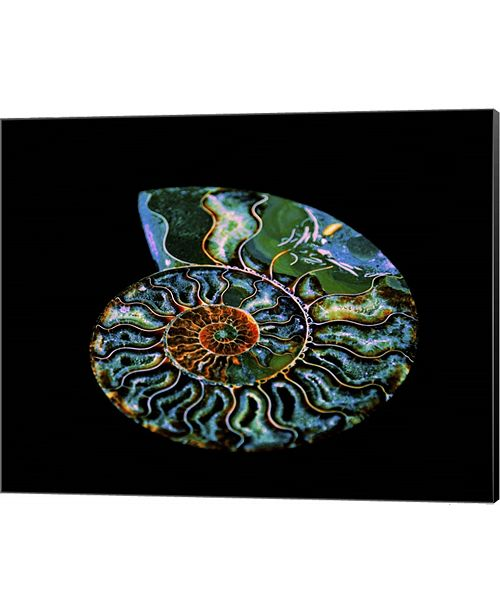 Metaverse Nautilus I By Lightboxjournal Canvas Art
