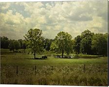 Cattle Pond In Summer by Jai Johnson Canvas Art