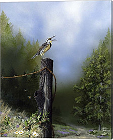 Early Morning Song By Russell Bentley Canvas Art