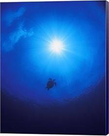 Tortoise Swimming Towards The Light By Designpics Canvas Art