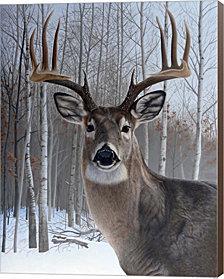 Deer By Rusty Frentner Canvas Art