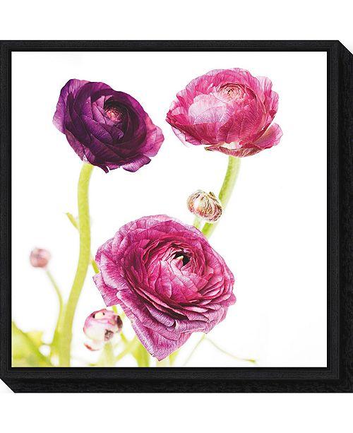Amanti Art Spring Ranunculus I by Laura Marshall Canvas Framed Art