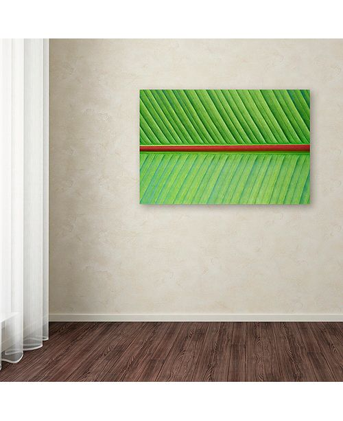 "Trademark Global Cora Niele 'Leaf Texture V' Canvas Art, 30"" x 47"""