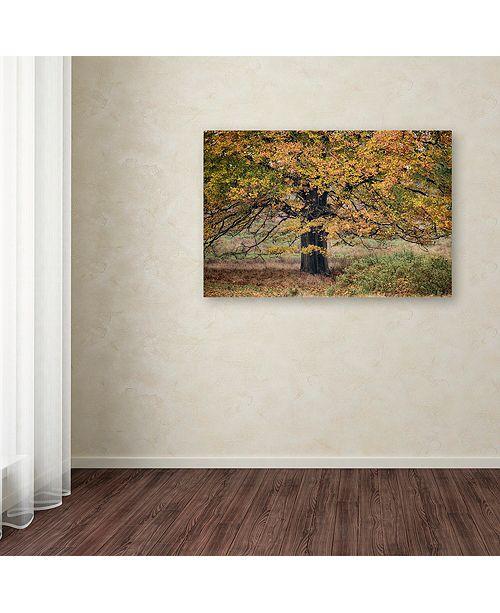 "Trademark Global Cora Niele 'Beech Tree' Canvas Art, 22"" x 32"""