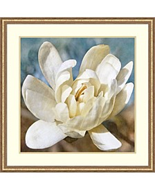 Magnolia 1  Framed Art Print