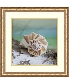 Amanti Art Shell And Driftwood I Framed Art Print