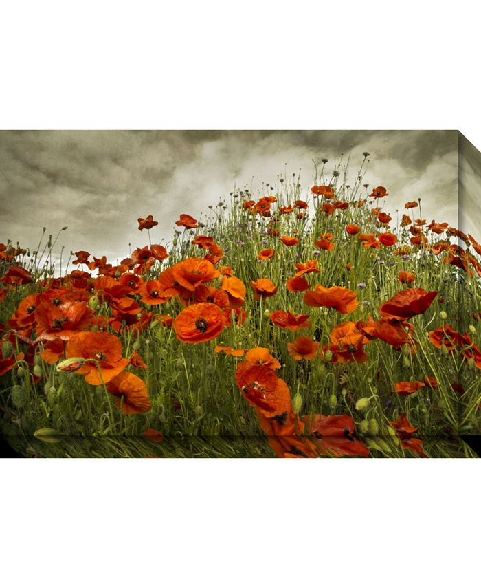 Amanti Art - Bobbi's Poppies 30x20 Canvas Art Gallery Wrap